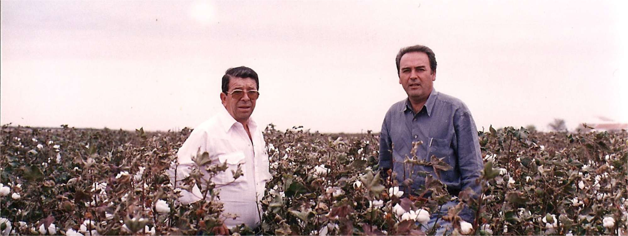 In 1986, Antonio Fernández Montero and his brother Gregorio acquire the two farms, after which they decide to modernise machinery and start growing new crops such as organic olives from the Arbenquina variety. Believe it or not, but in 2016 our olive trees will be 30 years old!